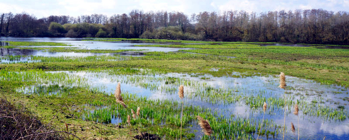 la réserve naturelle nationale de Bruges