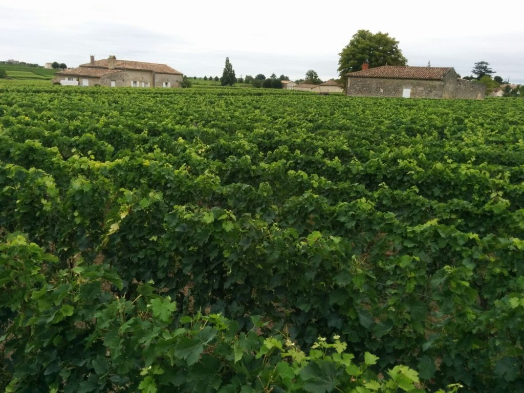 vineyards in Saint Emilion