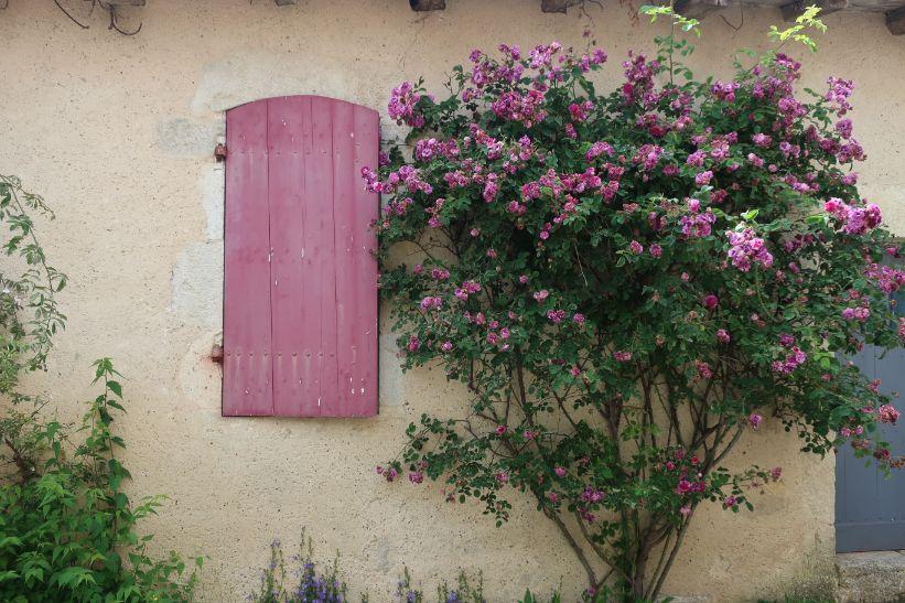 roses in castelmoron d'albret