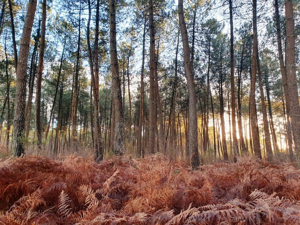 Forêt de Migelane in Martillac
